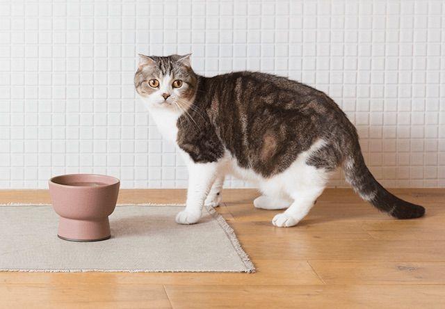こだわりの一品!大谷焼で作られたオシャレな猫用水飲み器