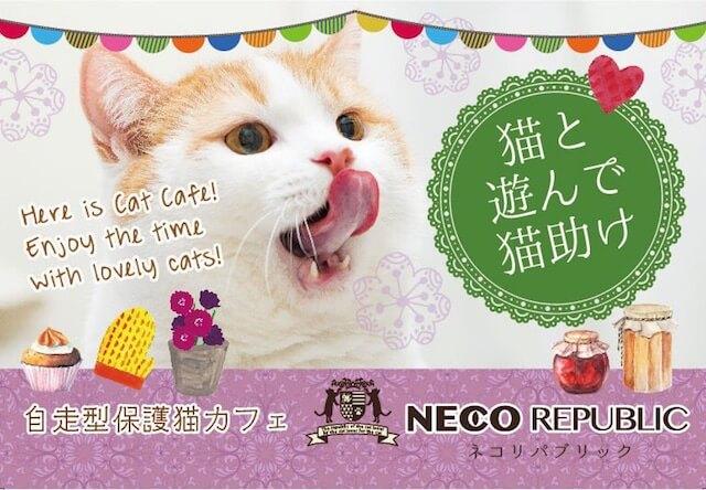 保護猫カフェ ネコリパブリック