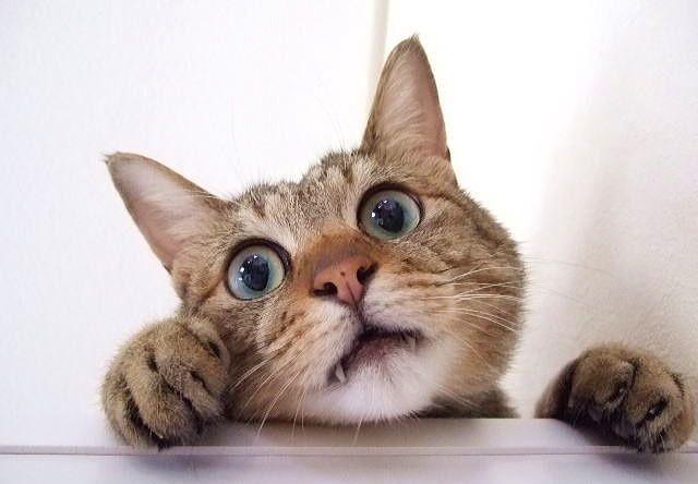 愛猫がデビュー!?雑誌GetNaviが猫のモデルを募集中だにゃ