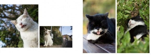 写真集「しまい忘れた猫」