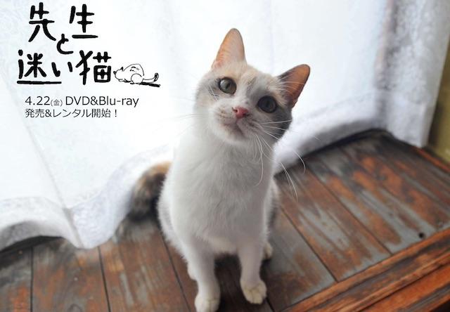 タレント猫の「ドロップ」