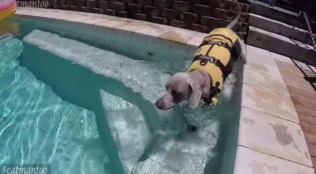 犬の背中を使ってサーフィンする猫の動画