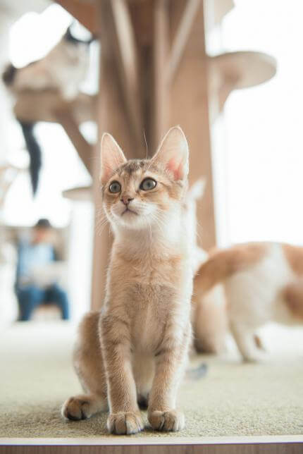 MoCHA(モカ)原宿店 猫の撮影イメージ