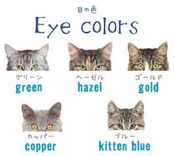 猫の目の色 英語
