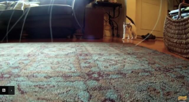 猫との遭遇 フリスキーによる猫目線のカメラ動画