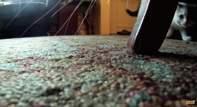 猫との攻防 フリスキーによる猫目線のカメラ動画