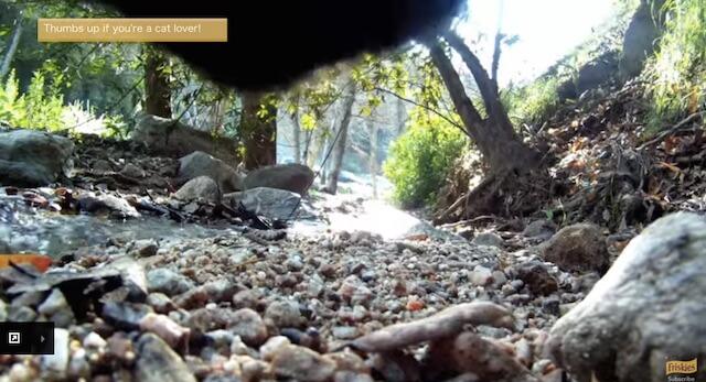 森の中 フリスキーによる猫目線のカメラ動画