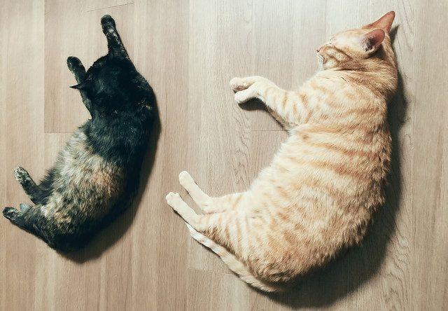 横たわって寝ている兄弟猫 – 猫の写真素材