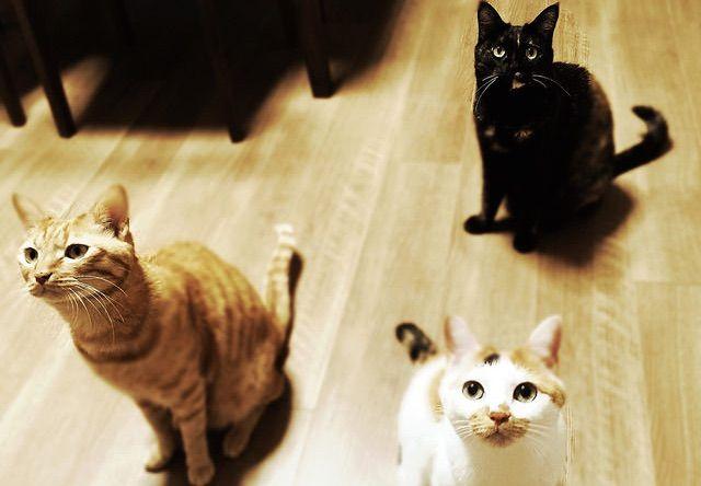 待ち受ける三匹の猫 - 猫の写真素材