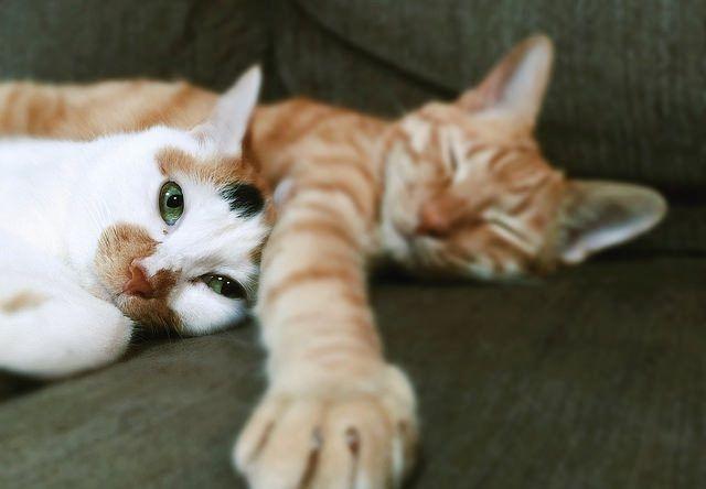 添い寝する仲良し猫 - 猫の写真素材