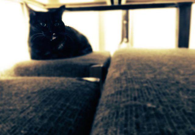 テーブルの下でくつろぐ猫 - 猫の写真素材