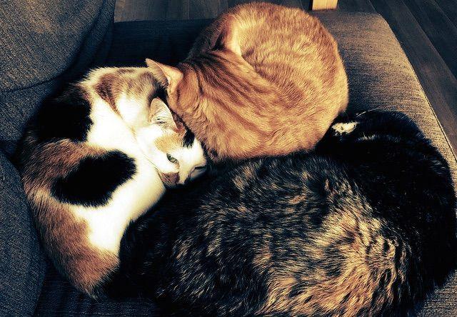 3匹の猫団子 - 猫の写真素材
