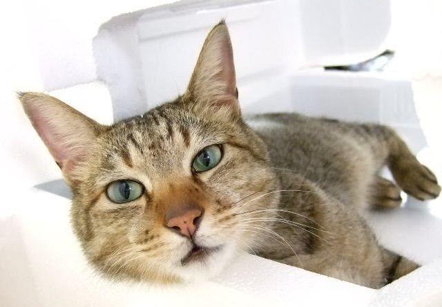 【2016年版】 ゴールデンウィークの猫イベントまとめ