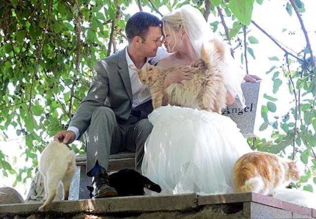 1100匹の猫と一緒に結婚式を挙げたカップル