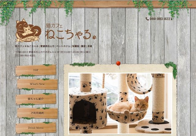 松山の保護猫カフェ「ねこちゃる」