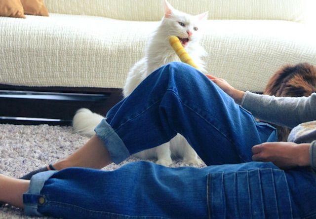 猫がバリバリ爪をとげる「猫モテジーンズ」が新発売