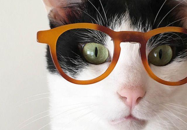 人気インタグラマー10人の猫フォトブックが本日発売だにゃ