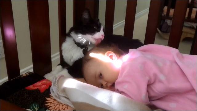 赤ちゃんの頭を毛づくろいする猫