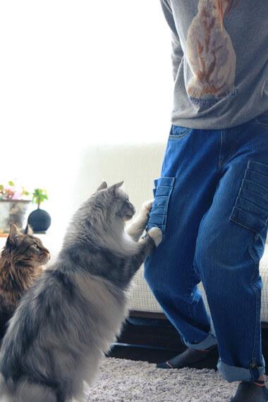 ジーンズで爪をとぐ猫