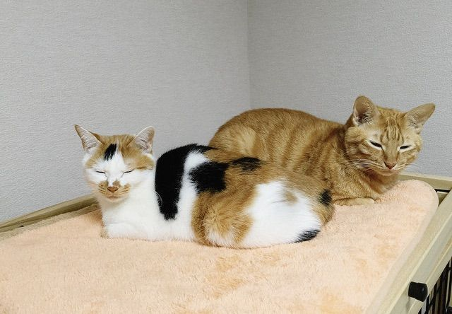 眩しそうにする2匹の猫 - 猫の写真素材