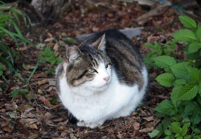 長野の山中で猫20匹が遺棄された疑い、市民らが全て引き取る