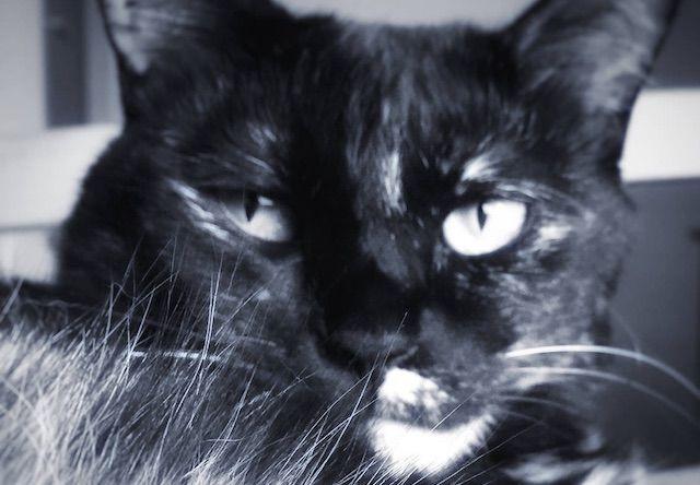 渋い表情を見せる猫 - 猫の写真素材