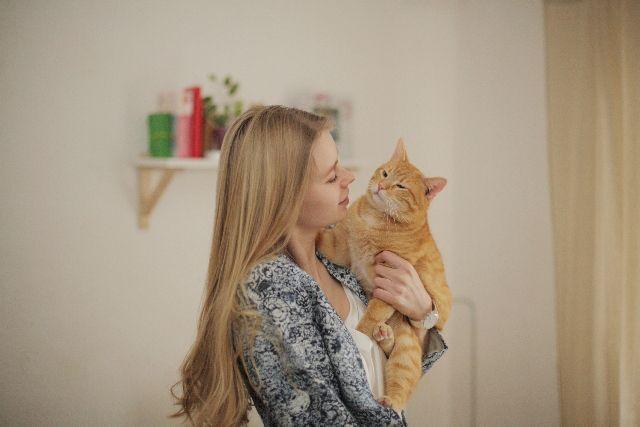 猫との接触