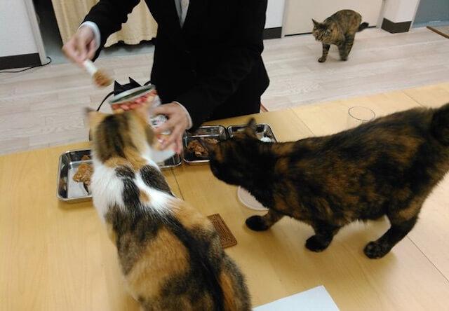 猫のご飯の準備をする就活生