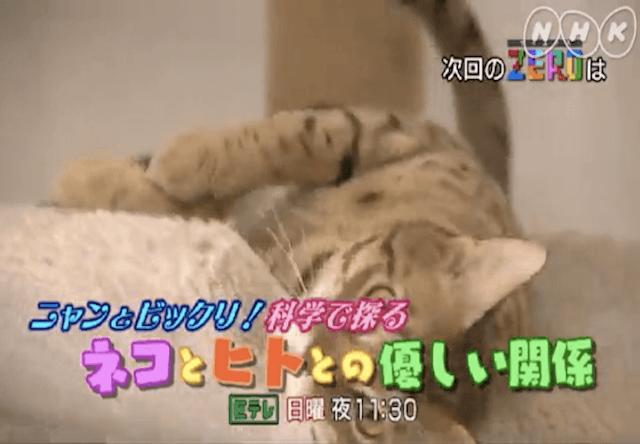 ニャンとビックリ!科学で探る ネコとヒトとの優しい関係