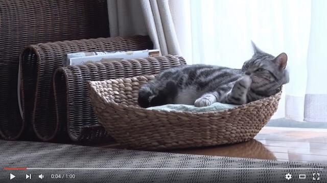 「グーグーだって猫である」のメイキング動画