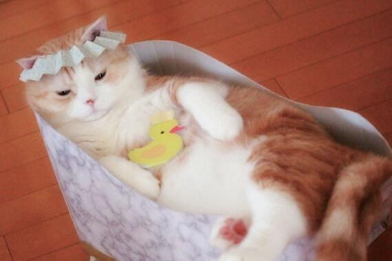 シャンプーハットの似合う猫