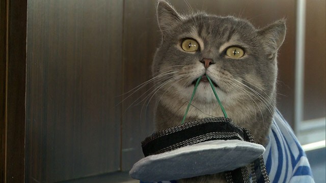 やんちゃな水夫猫です