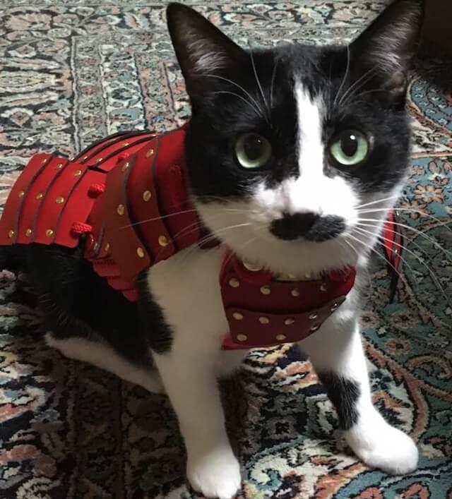 猫鎧の赤を装着
