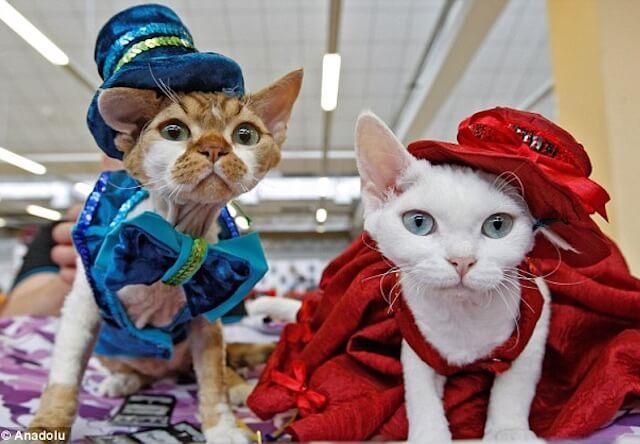 衣装を着た猫たちが可愛い!ウクライナのネコ展覧会を紹介