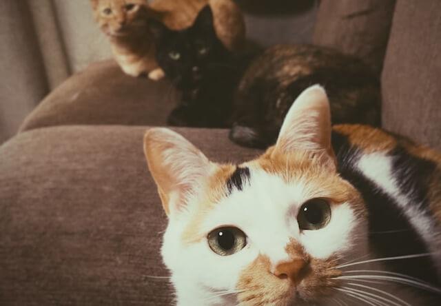 3猫の視線が釘付け - 猫の写真素材