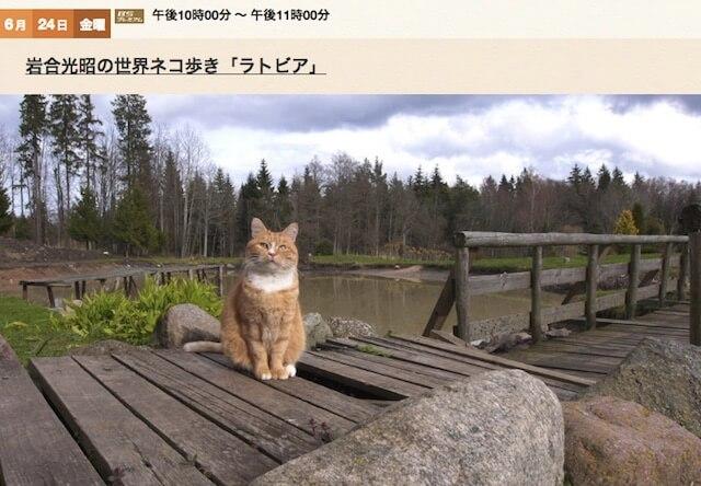 岩合光昭の世界ネコ歩き、来週6/24は新作「ラトビア」