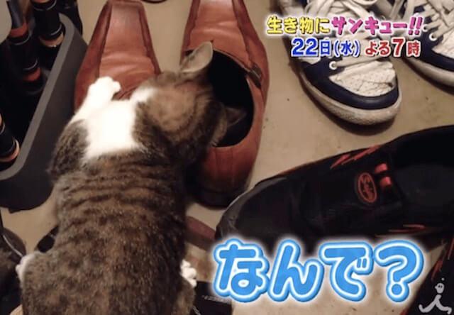 生き物にサンキュー!! 猫は人の顔色をみて生きているSP