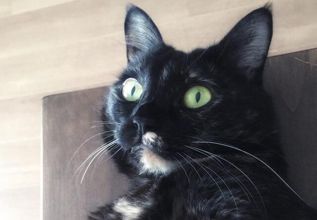 サビ猫のきょとん顔 - 猫の写真素材