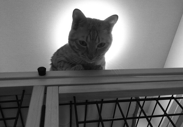 後光が射す茶トラ - 猫の写真素材