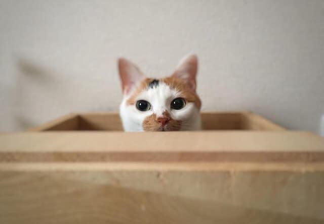 木箱からひょっこり顔を出す猫 - 猫の写真素材
