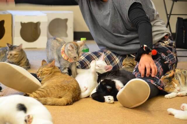 川越にある保護猫カフェ「ねこかつ」