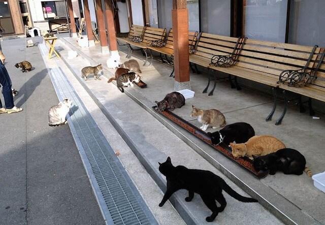 猫寺の敷地内にいる約30匹もの猫