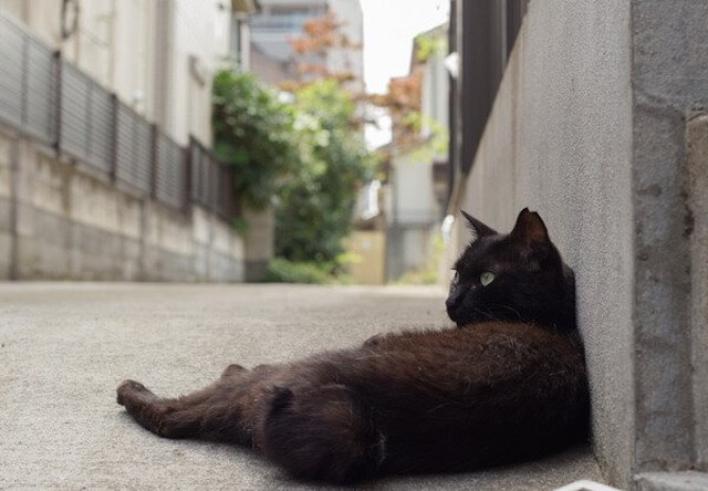 沖昌之さんの猫写真1