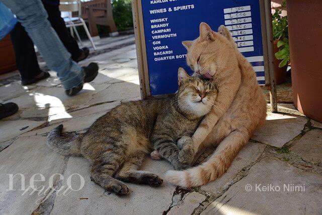 新美敬子さんの猫写真