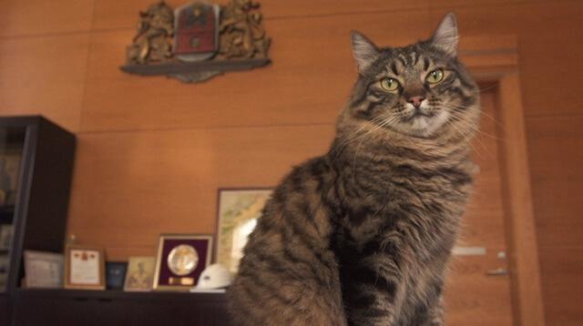 ラトビア リガの市長室に猫が?