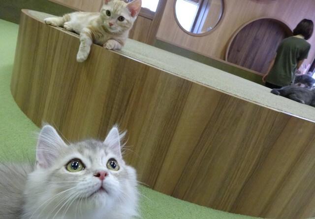 猫カフェ「僕と猫。」の猫たち