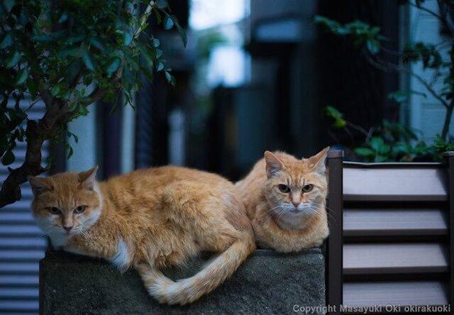 沖昌之さんの猫写真3