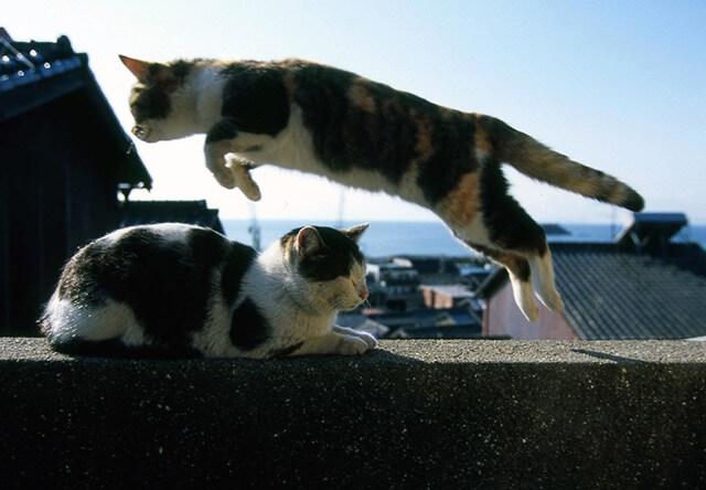 「牛窓」「尾道」「鞆の浦」などの港町に暮らすネコの写真