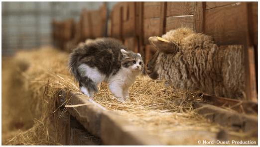 フランスの農場で暮らす猫