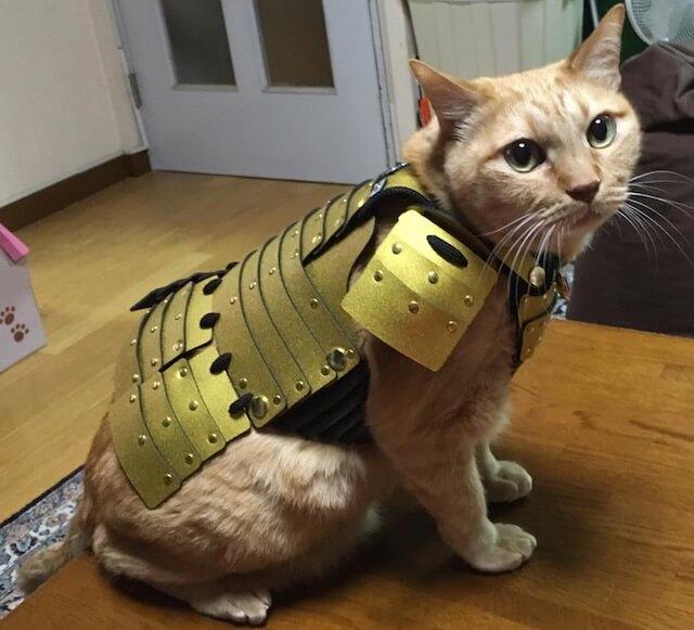 猫鎧の金を装着